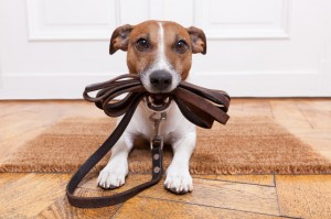 Tips for Housetraining Your Puppy